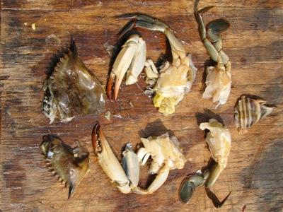 peeler crabs