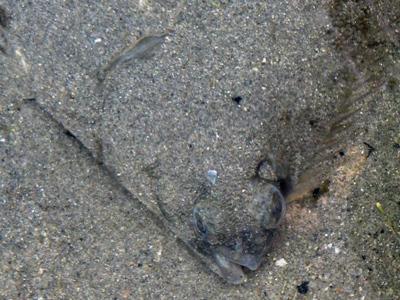 Winter flounder fishing for Winter flounder fishing